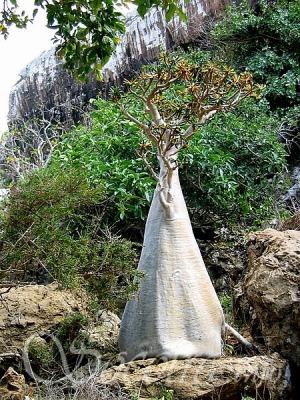 Keanehan Pulau Socotra Yaman: Pulau Dajjal dikurung?